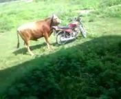 Sunny Belani