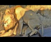 Kruger Sightings