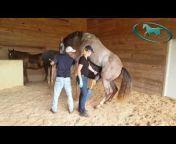Performance Equine Vets